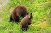 1-start-bears22