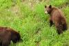 1-start-bears23