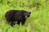 1-start-bears28