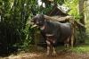 4-bull-killing-graves20