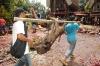 4-bull-killing-graves25