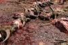 4-bull-killing-graves27
