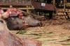 4-bull-killing-graves28