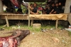 4-bull-killing-graves29