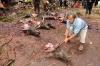 4-bull-killing-graves30