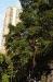 5-trees-hk21