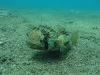 6-under-water-229